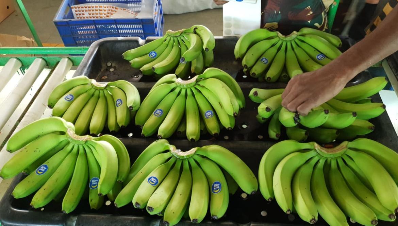hb_photo_banana